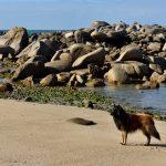 Am Strand von Plouescat Sandstrände zwischen Granitblöcken. @ Klaus W. Schmidt