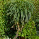 Exotisch wirkende Pflanzen in Saint-Pol. @ Klaus W. Schmidt