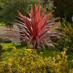 Exotisch wirkende Pflanzen in Saint Pol @ Klaus W. Schmidt