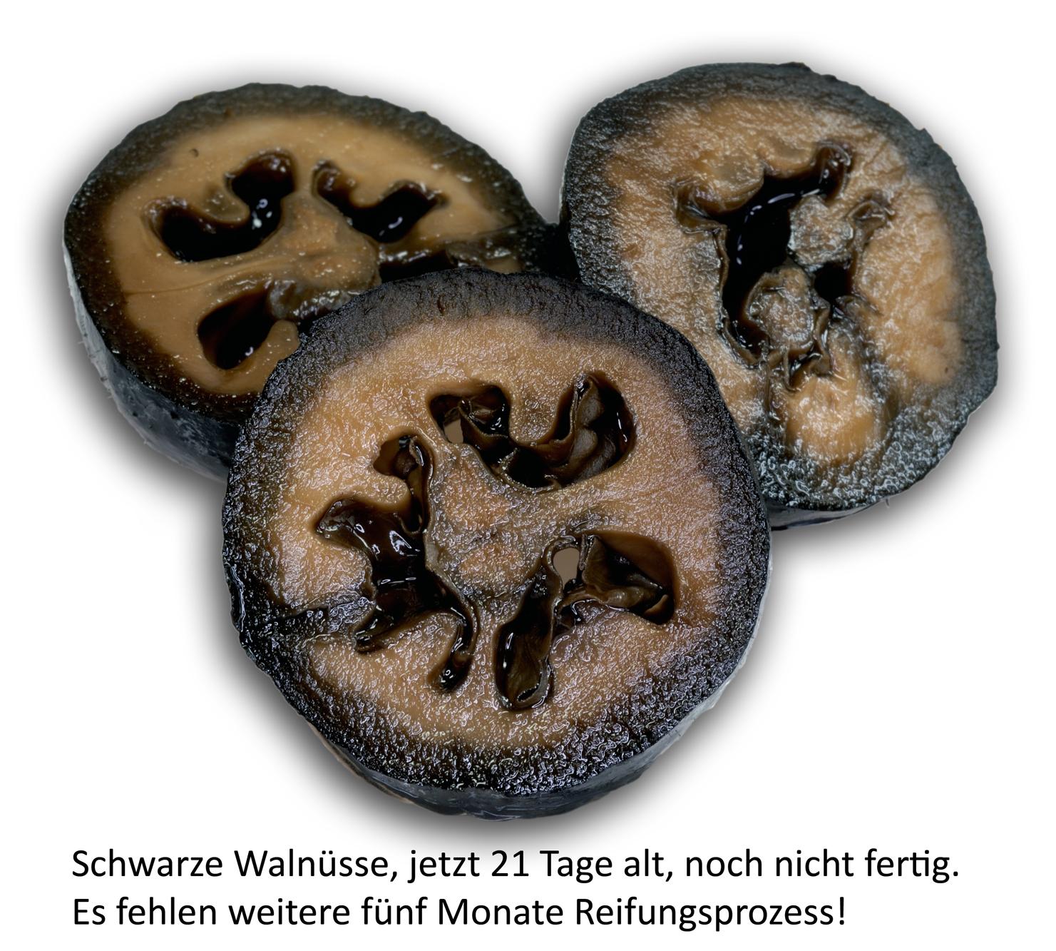 Schwarze Walnuss, 21igster Tag