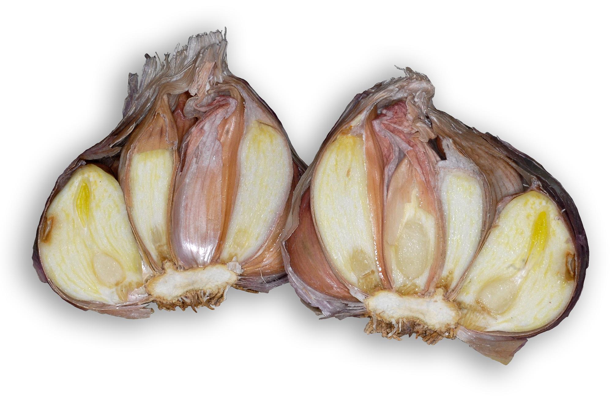Knoblauchknolle, aufgeschnitten