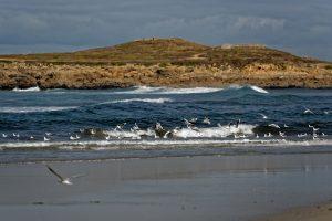 Die Möwen scheinen beim Wellenreiten auf ihre Art mitzumachen
