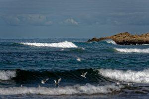 Wo es ordentlich an den Strand brandet sind Surfer nicht weit