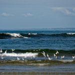 Surfschüler versuchen sich an scheinbar harmlosen Wellen