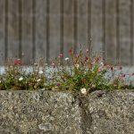 Pflanzen setzen sich überall durch