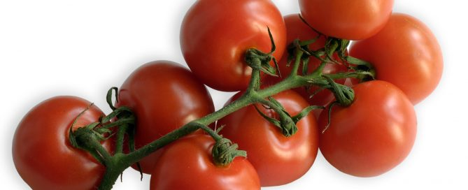 Kirschtomaten, eine Sorte aus der großen Familie der Tomate