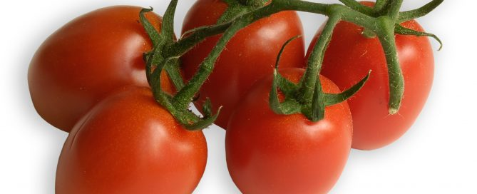 Eiertomaten, eine Sorte aus der großen Familie der Tomate