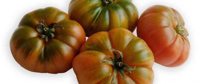 Gerippte Tomaten, eine Sorte aus der großen Familie der Tomate