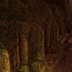 In Stein gehauene Säulen in der Krypta auf beiden Seiten