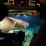 Ein Sechskiemerhai auf dem Weg zu einem Walkadaver. In der Tiefsee zählt jede Kalorie, hier herrscht Nahrungsnotstandgebiet. Die großen Haie haben einen sehr langsamen Stoffwechsel und können in der Kälte der Tiefsee ein Jahr ohne Futter aushalten. Das Foto wurde im Tauchboot 'Lula' der Rebikoff-Niggeler-Stiftung aufgenommen. Bild: WDR/BBC NHU/Will Ridgeon